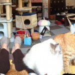 Lots o' cats